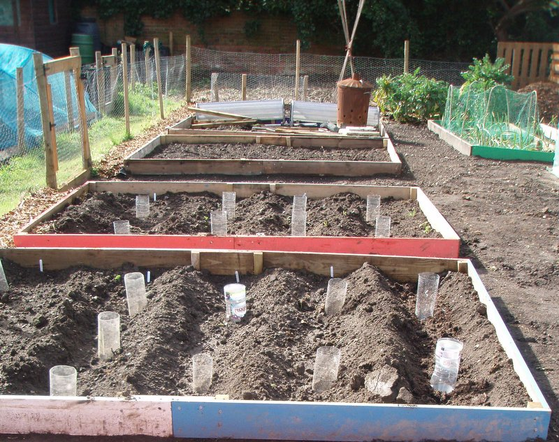 Watering points in potato trenches