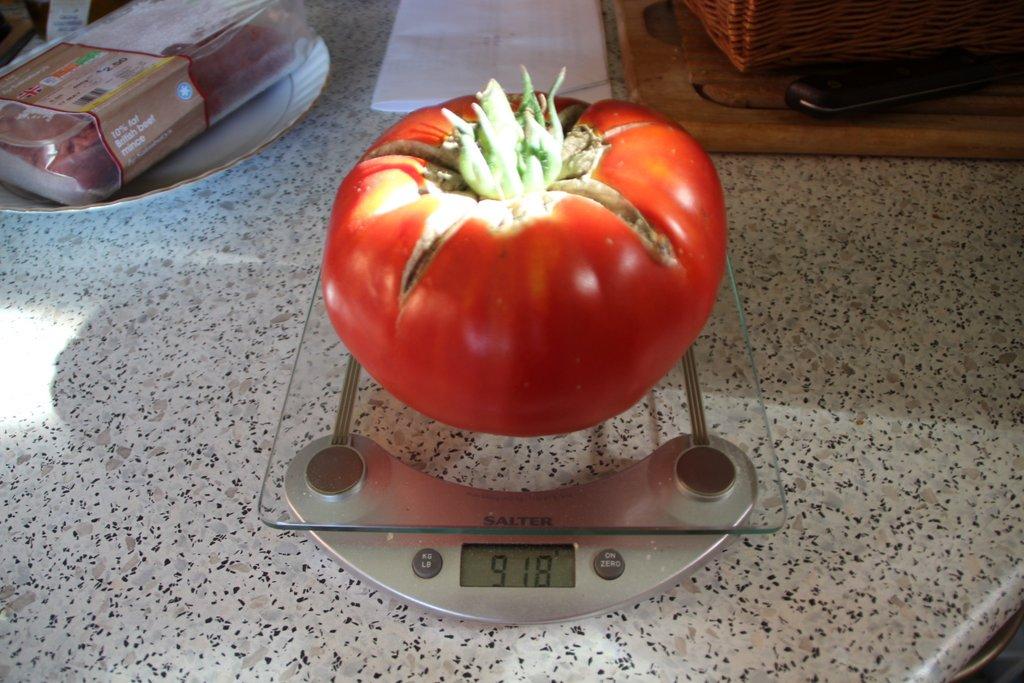 """""""Gertie"""" the gert big tomato"""