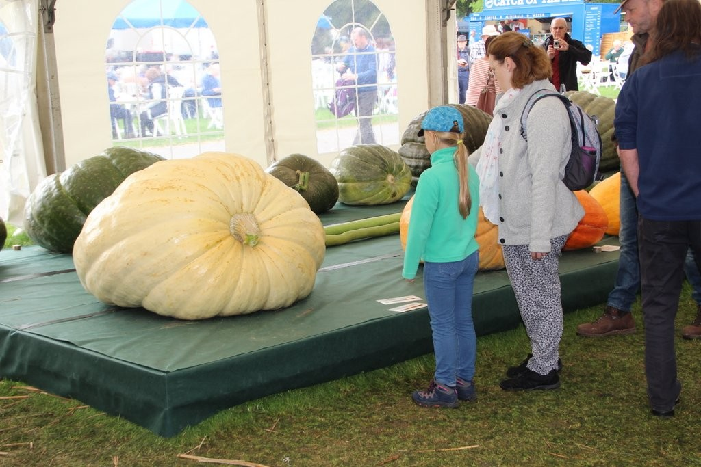 Really Giant Pumpkins