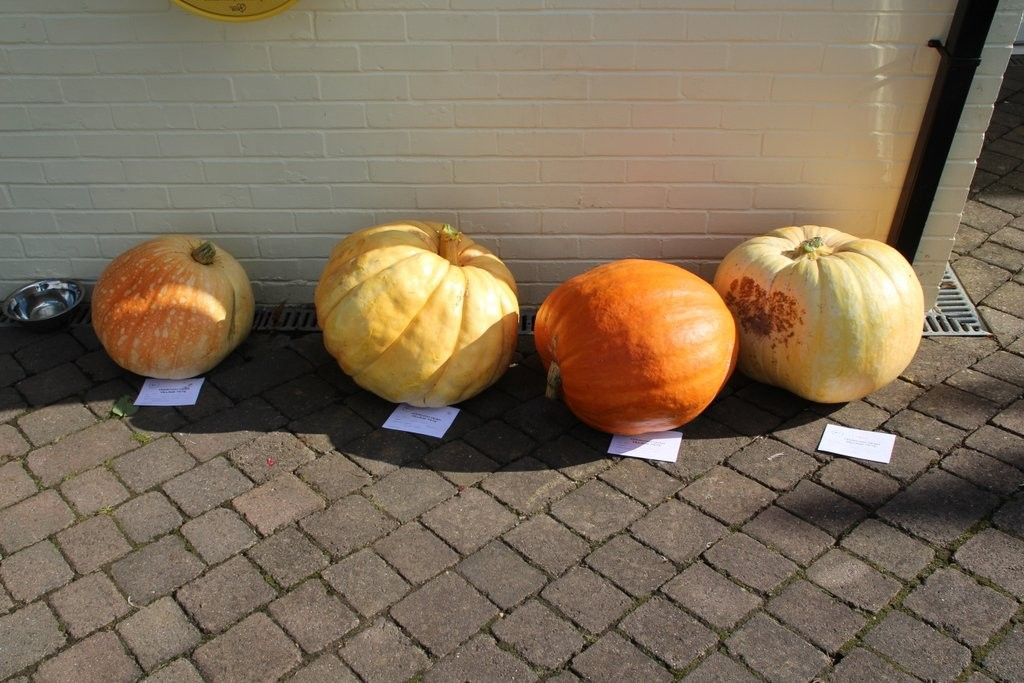 Cookham's Pumpkins