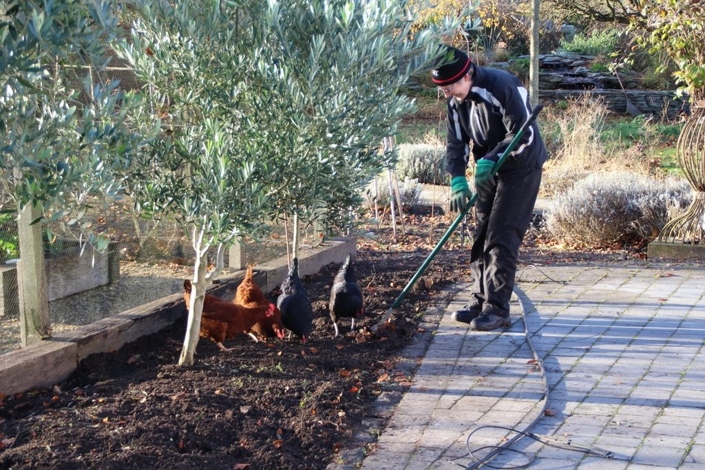 Planting - November 2016