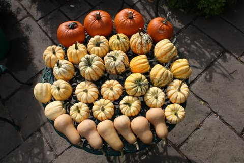 Squashes curing
